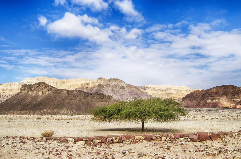 israel, negev, timna park